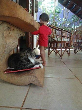 Pousada Bambu: Um dos gatos recepcionistas