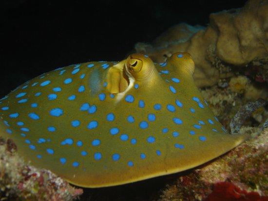 Wakatobi Dive Resort : Soo cute !