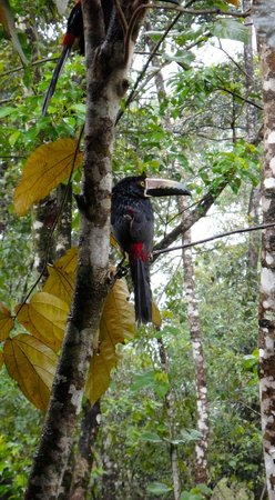 Tree Houses Hotel Costa Rica: Aracari