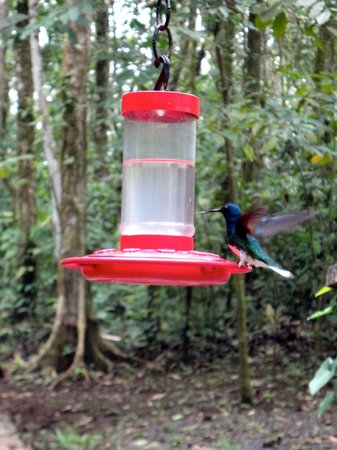 Tree Houses Hotel Costa Rica: Hummingbird