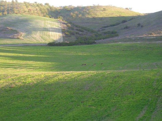The Canyon Villa: Deer in meadow next door in morning