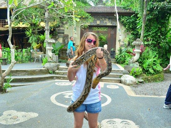 Bali Zoo: python