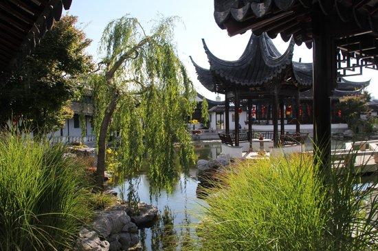 Dunedin Chinese Garden: Chinese garden , Dunedin, NZ