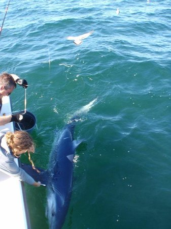 Big Blue Shark Picture Of Rita B Offshore Fishing