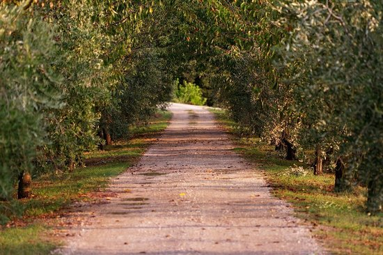 Agriturismo Casagrande : road to the house
