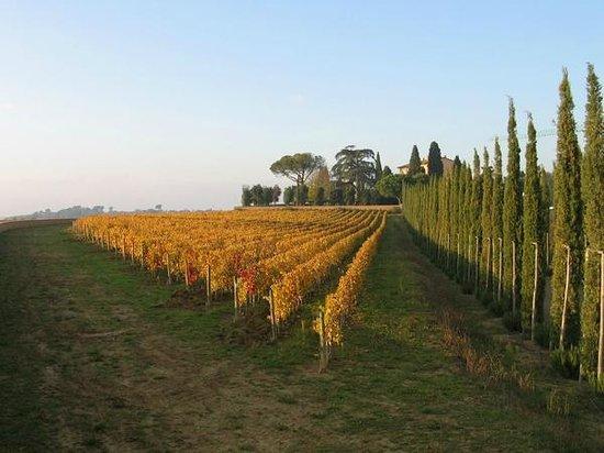Villa Loggio Winery