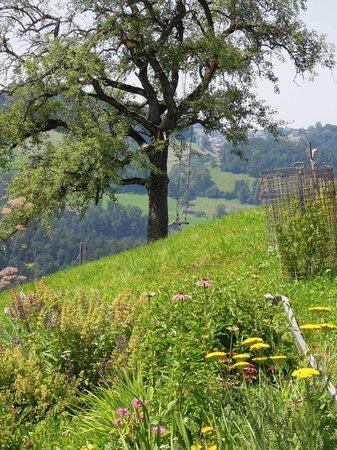 B&B Bergbolt: Schaukeln übers Tal fliegen