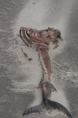 B&B De Postoari Terschelling: dit was een bruinvis