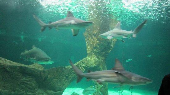 Zoo Aquarium de Madrid: 4