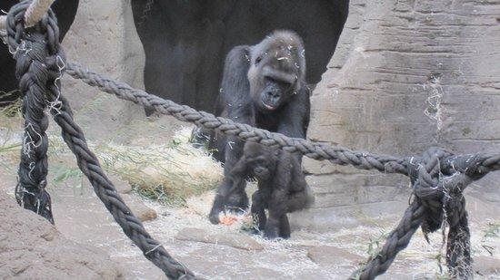 Zoo Aquarium de Madrid: 7