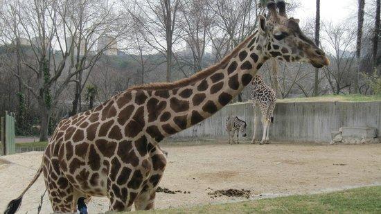Zoo Aquarium de Madrid: 1