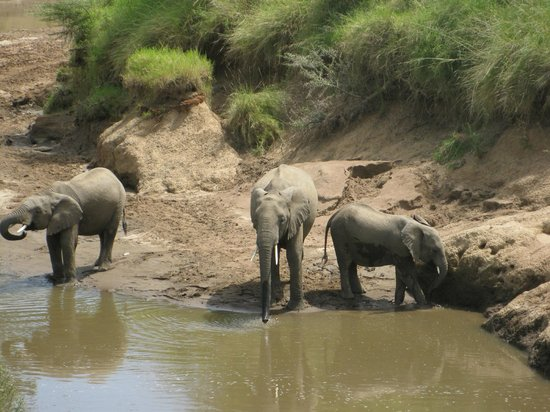 Governor's Camp: elephants bathing infront of bar area