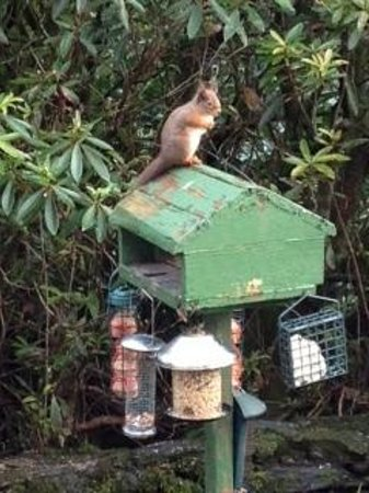 Abbot's Brae Hotel: Red Squirrel
