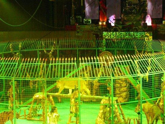 Vladivostok Circus