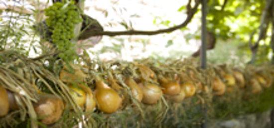 Albergo Il Monastero: Prodotti dell'orto