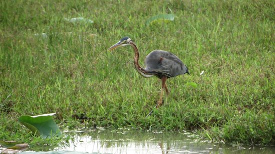Talangama Wetland: Bird at Thalangama