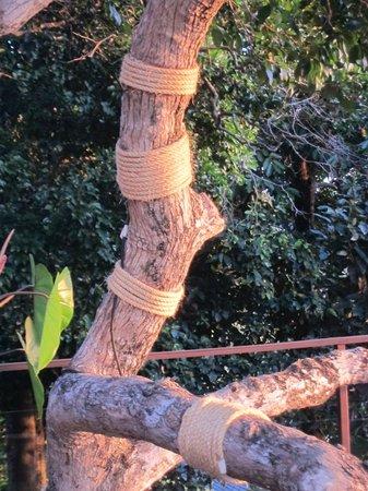 Paresa Resort Phuket: Well preserved old trees