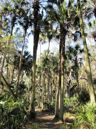 Hontoon Island State Park: Woods
