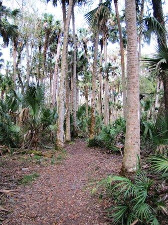 Hontoon Island State Park: Trail