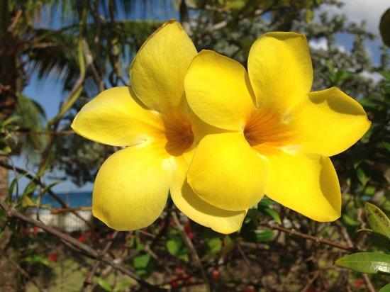 Radisson Grenada Beach Resort: beautiful blooms