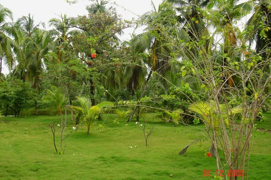 Adaaran Select Hudhuranfushi: garden