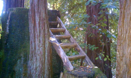 Redwood Croft: redwoods