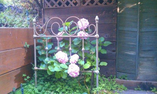 Redwood Croft: garden