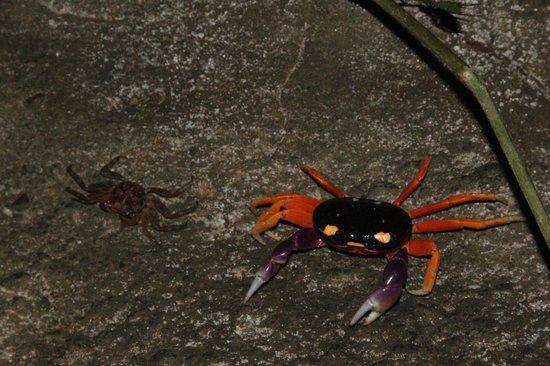 La Leona Eco Lodge: Halloween Crab
