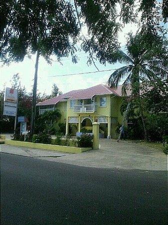 可可棕櫚照片