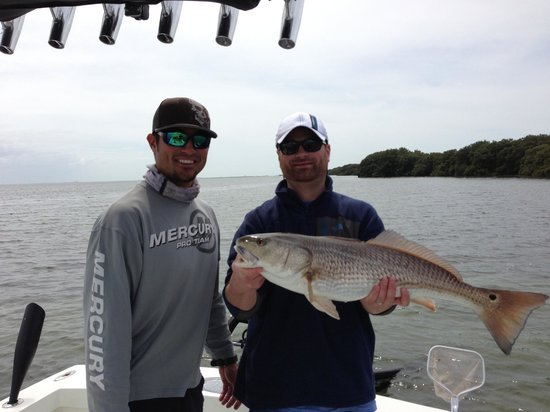 Red fish picture of tampa fl fishing charters tampa for Tampa florida fishing charters