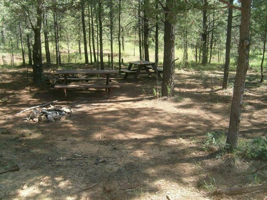Camp of the Tall Pines: the camp site