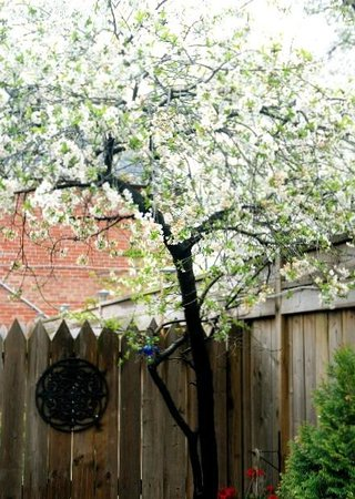 Cozy Suites Inn: All of our trees flower at Cozy Suites