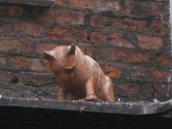 York Cat Trail: Our favourite!