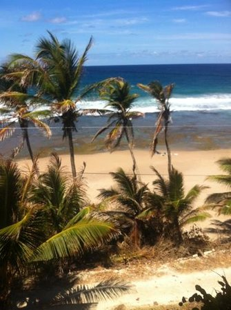 Sea-U Guest House: bathsheba beach