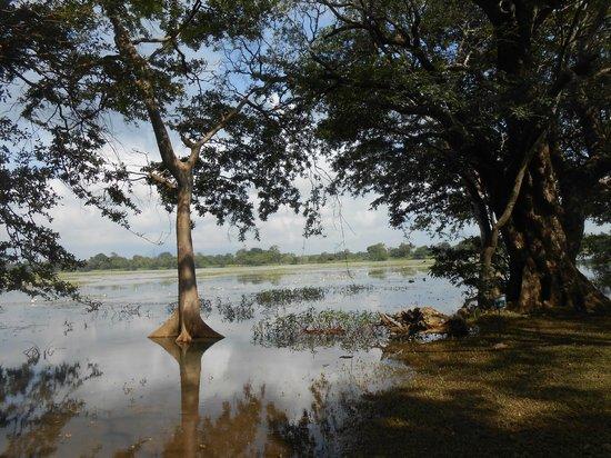 Cinnamon Lodge Habarana: A view of the Lake