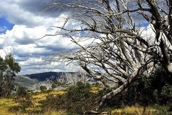 Bogong Horseback Adventures : The textures of the Australian landscape