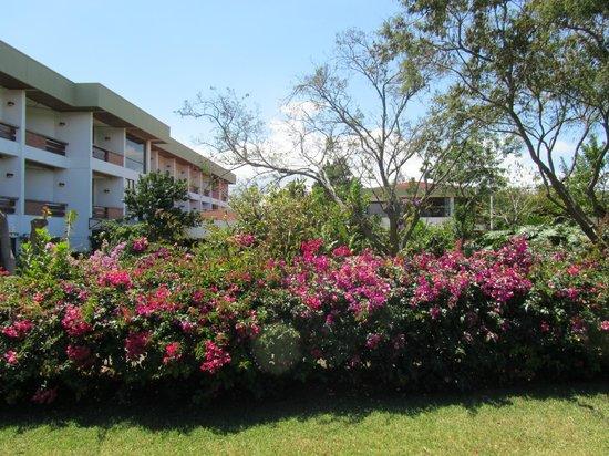 Hotel Bougainvillea: Garden