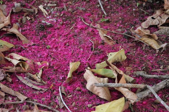 """Isla Palenque: Nature's """"carpeting"""" under a tree"""