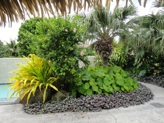 Te Manava Luxury Villas & Spa : garden areas