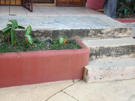 Massai Apartments: Mold on cement steps