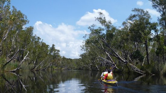 Kanu Kapers Australia Noosa Everglades Kayak Day Tours
