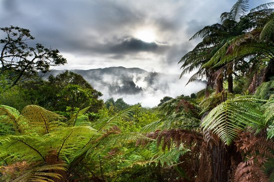 Magnificent New Zealand bush at Waimangu Volcanic Valley, Rotorua