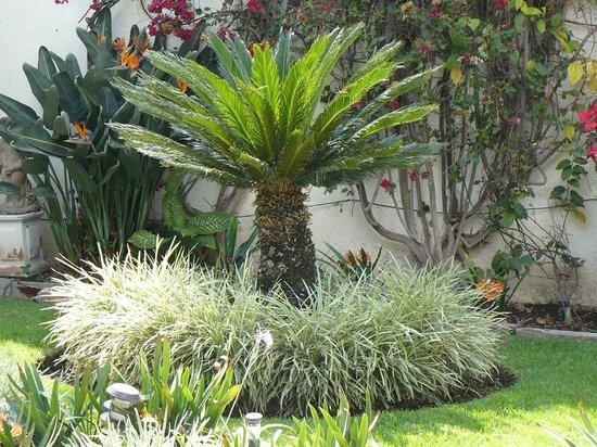 lush gardens at Quinta Del Sol