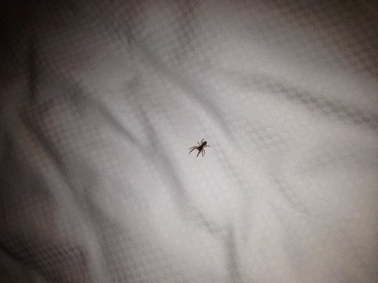 Silverton Hotel and Casino: Spider was waiting for me. It's the desert so...