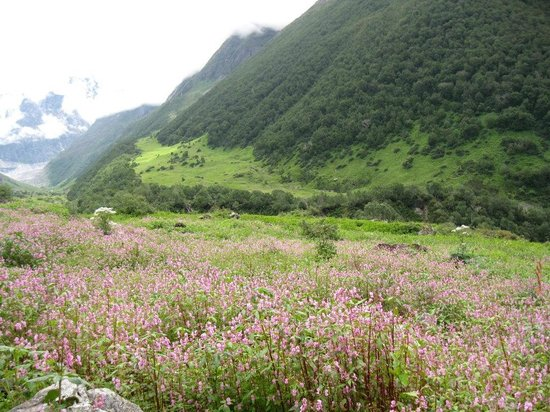 Valley of Flowe...
