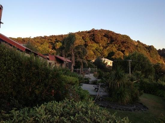Harbour View Motel: View across motel to the Kauri block & Pa bush walk