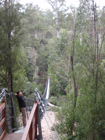 Tahune Adventures: Larger of the two swinging bridges