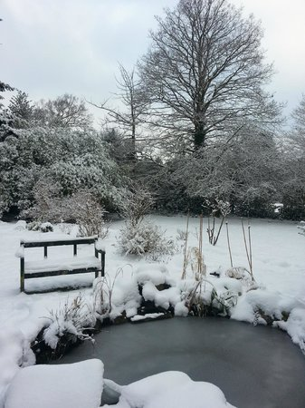 Rosemead Guest House: garden in winter