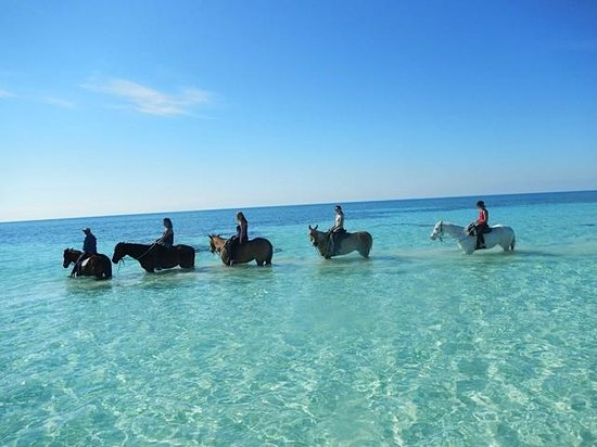 Island Seas Resort: Horse Back Riding on the beach