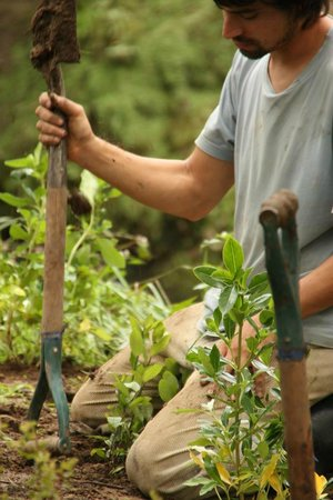Fat Cat Eco Backpackers : native tree planting